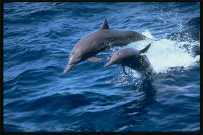 20080422140830-delfines3.jpg